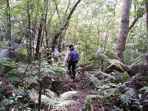 060902西表島横断ジャングルの道