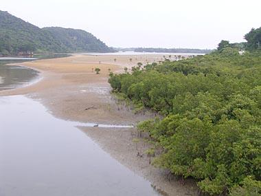 浦内川河口