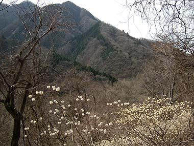 080405丹沢の花