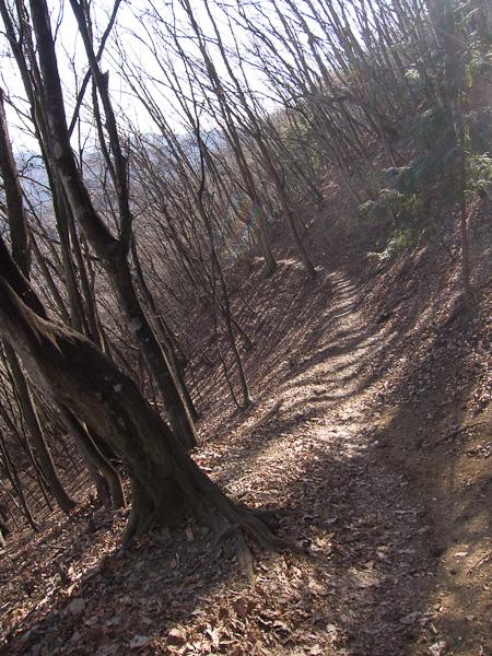 120107雲取山・登り尾根を下山