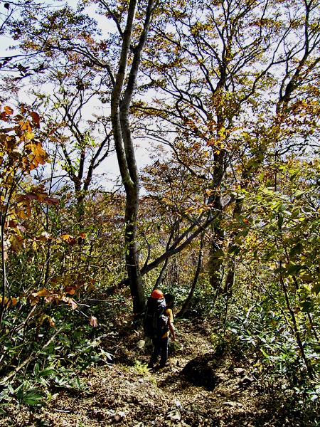 061015紅葉の中、白毛門から下る