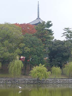071111興福寺