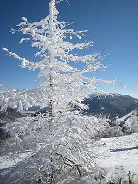 080127霧氷浅間山