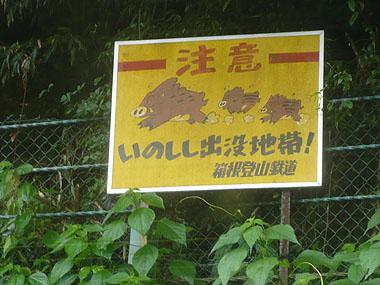 080531猪注意