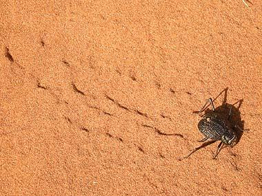 090427昆虫