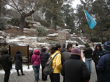 100102北京景山公園えんじゅの木