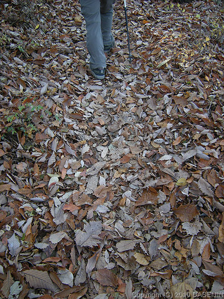101128御岳山・大塚山落ち葉を踏みしめて登る
