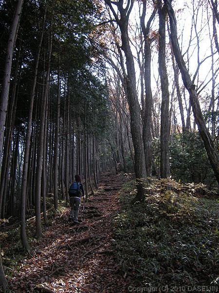 101128御岳山・大塚山への尾根道