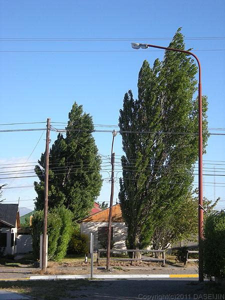101231エル・カラファテ風で斜めになった木