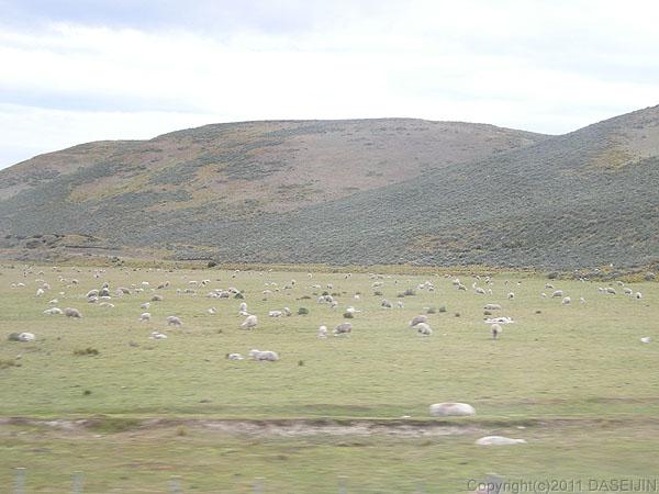 110105フエゴ島もずっと牧場