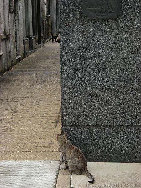 110108ブエノスアイレス・レコレータ墓地の猫
