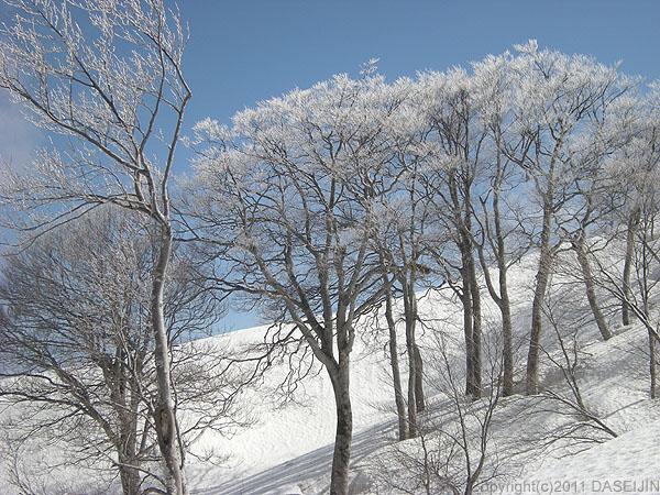 110417守門岳・霧氷