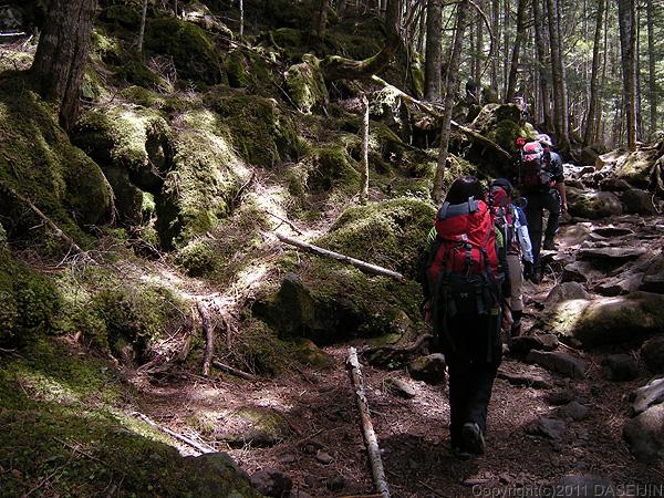 110604行者小屋に向かう樹林の道