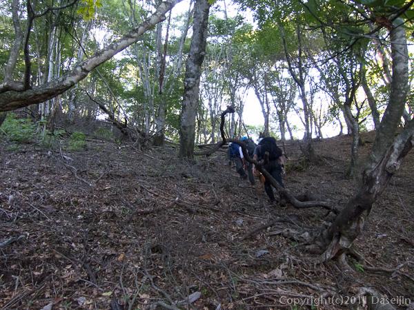 110918鷹ノ巣谷・詰めの林