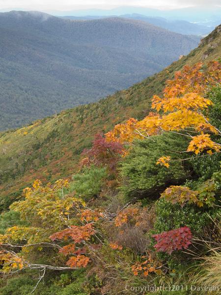 111002早池峰山・どんどん色づく紅葉
