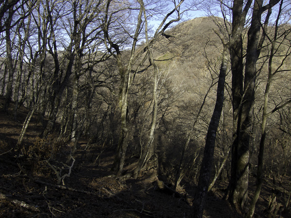 111204丹沢・鍋割山に向かう途中で塔ノ岳を振り返る