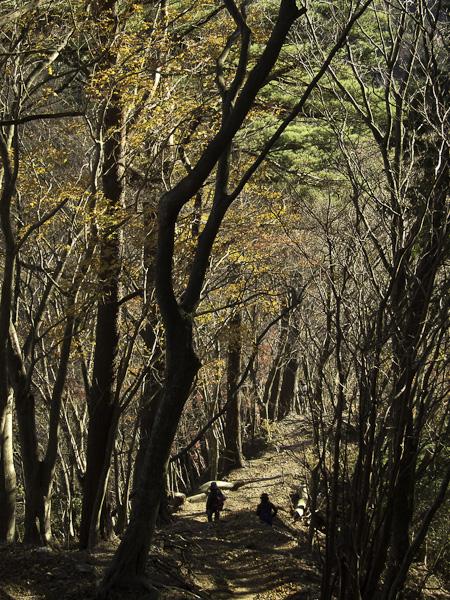 111204丹沢・鍋割山から下山