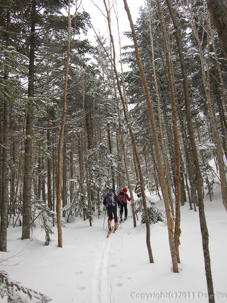 120325日光白根山・ずっと樹林帯の中をいく