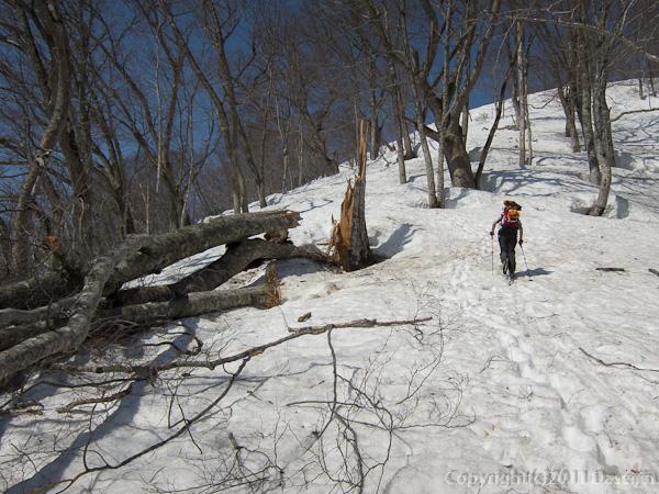 120421会津駒ヶ岳・穏やかな尾根を登る