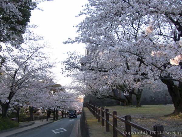 120404熊本・熊本城備前掘の桜3