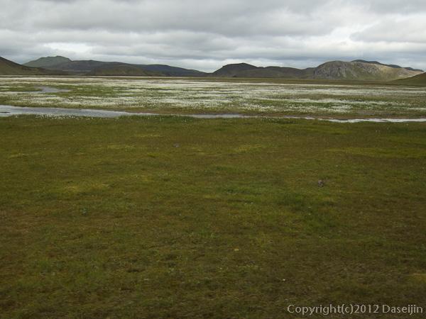 120808アイスランド、グリーンランドの旅・ワタスゲの湿原。ランドマンナロイガルは近い