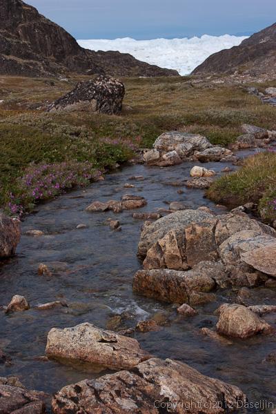 120813アイスランド、グリーンランドの旅・小川が流れ花が咲く