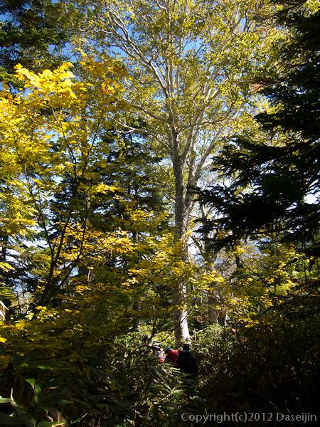 121008恋ノ岐・紅葉する木々